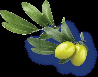oliwki